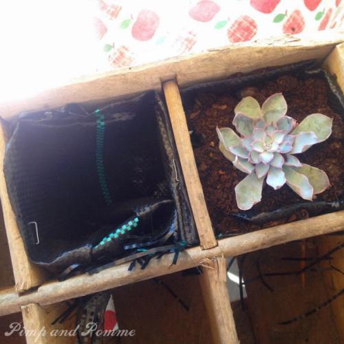 DIY-casier-bouteilles-pots-succulentes-cactus