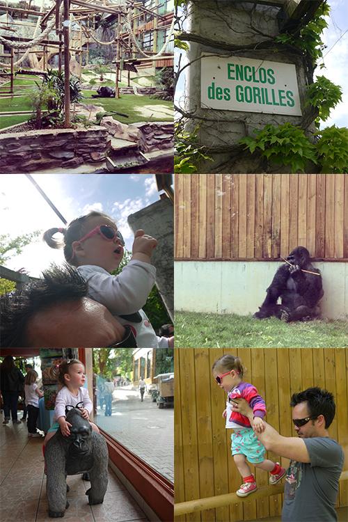 Nos-Endroit-Favoris-Lyon-zoo-saint-martin-la-plaine-gorilles