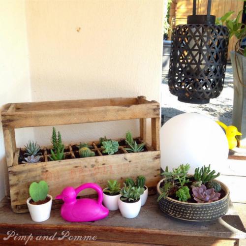jardin-magique-succulentes-cactus-flamingo-arrosoir-canard