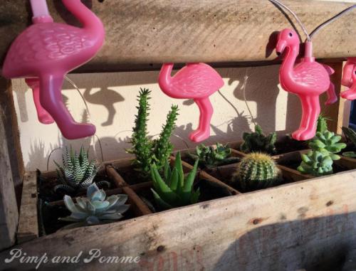 DIY-casiuer-bouteilles-mini-jardin-succulentes